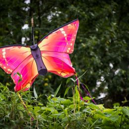 Thebutterfly