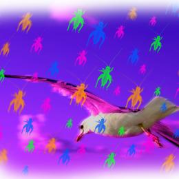 Sea Gull Dream Picture