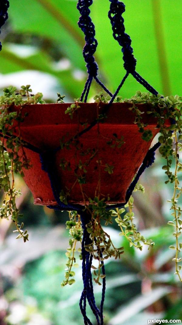 Floral pot....