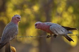 Bird Bokeh