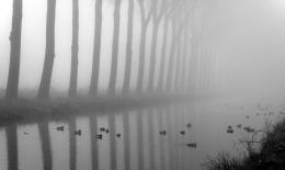 Fog on ducks