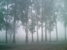 FoggyRoadside
