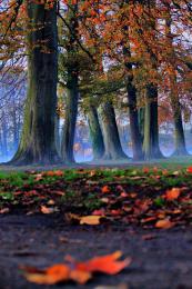 MistTrees