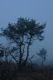Treesinfog