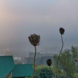 morningfog