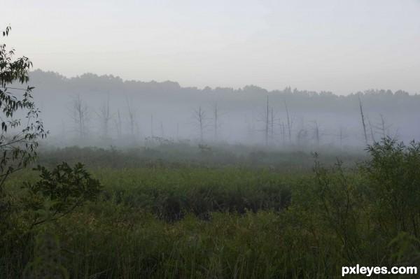 Foggy Marsh