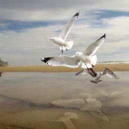 SeagullsattheShore