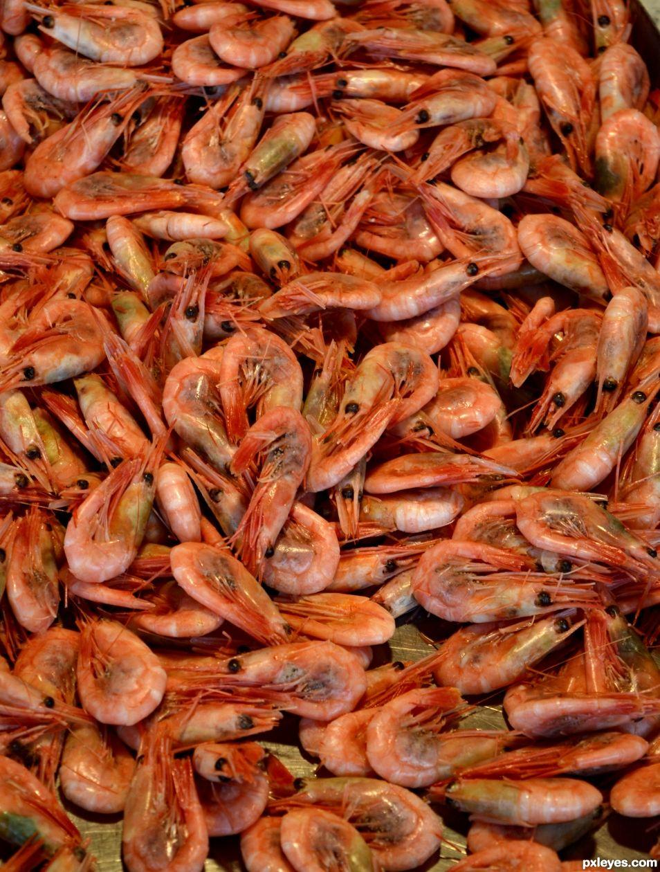 Anyone for shrimp