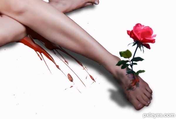 The body and the rose