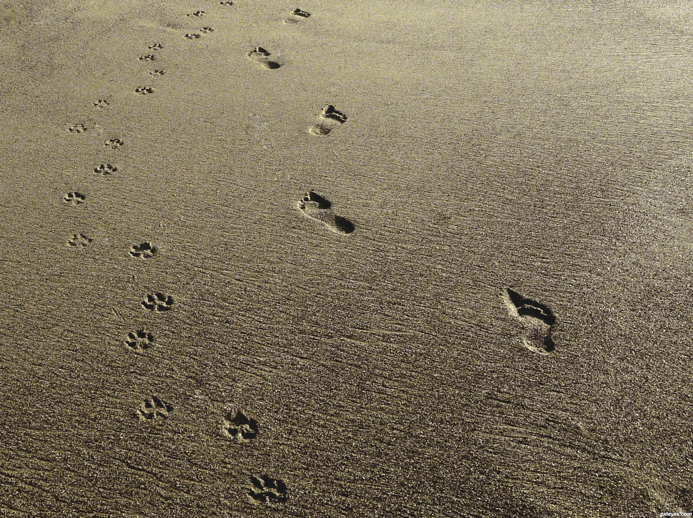 Dog Footprint Vs Cat Footprint