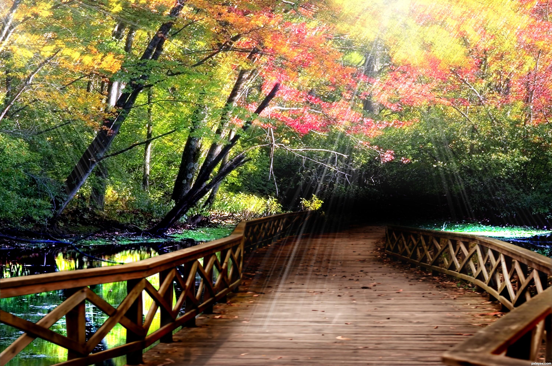 Forest Bridge | VPROJECT Josh Duhamel