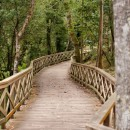 forest bridge photoshop contest