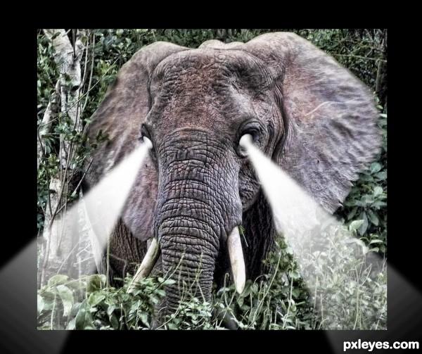 The White Eyed Elephant