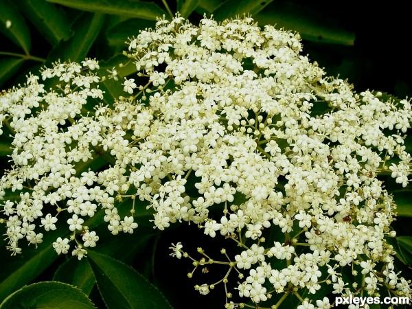 Fractal blossom