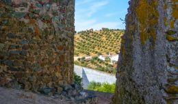 Olive grove through the old walls