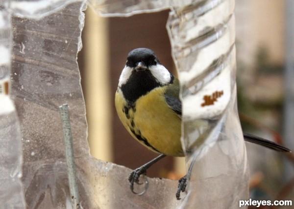 Frame sparrow