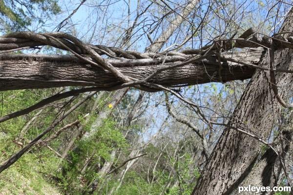 Tree Vine Frame