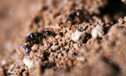 busy ants Picture