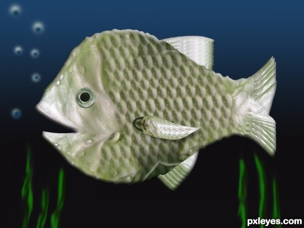 cabbage fish