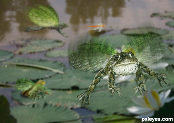 And If Frogs Had Wings photoshop picture)