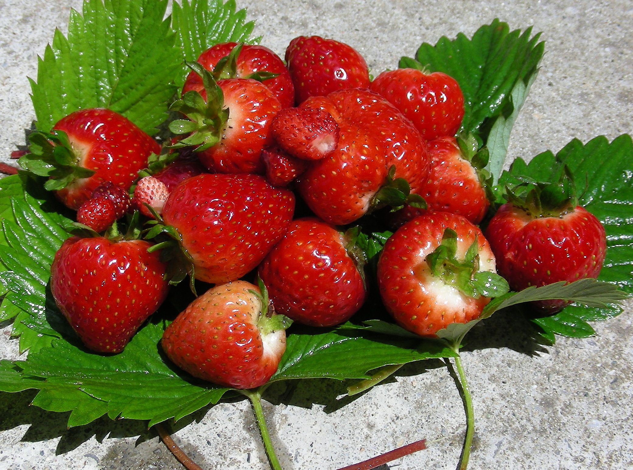 fruit strawberries 4 - photo #26