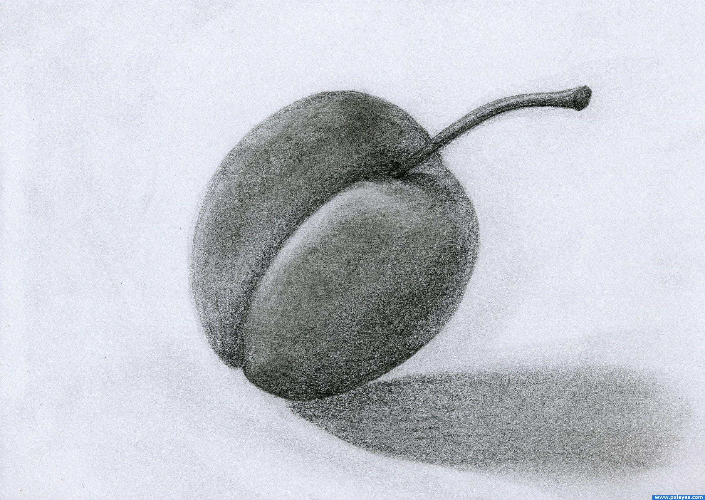 Fruit Pictures Drawing Graphite Plum