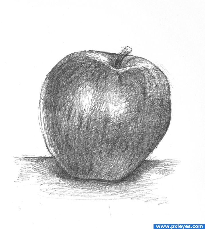 Fruit Sketch Drawing Apple