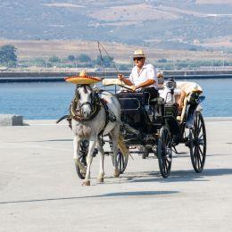 Ridethehorse