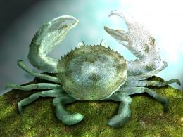 Crab affected by fungus!!