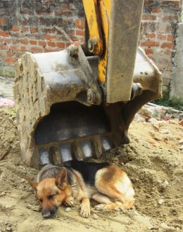 The lazy dog