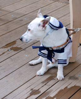 sailor dog