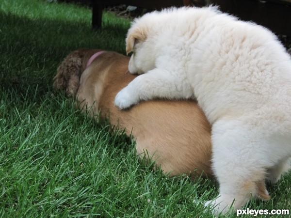 Super Puppy