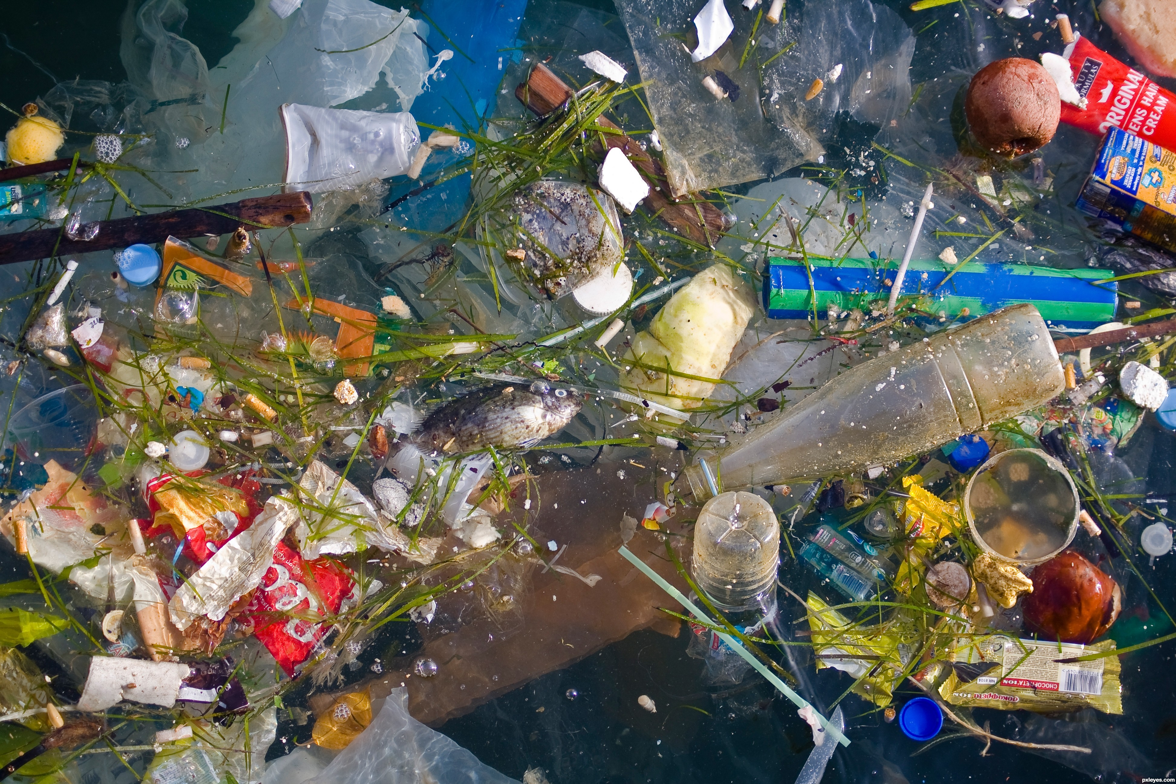 great pacific garbage patch Podcast: the great pacific garbage patch editor's note: this post was updated 02/07/2013 to correct the statement that previously misidentified the north pacific subtropical convergence zone as the great pacific garbage patch.
