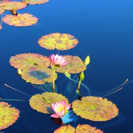 WaterliliesReflectingPool