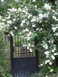 gate to sleeping beauty