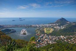 Seal in Rio