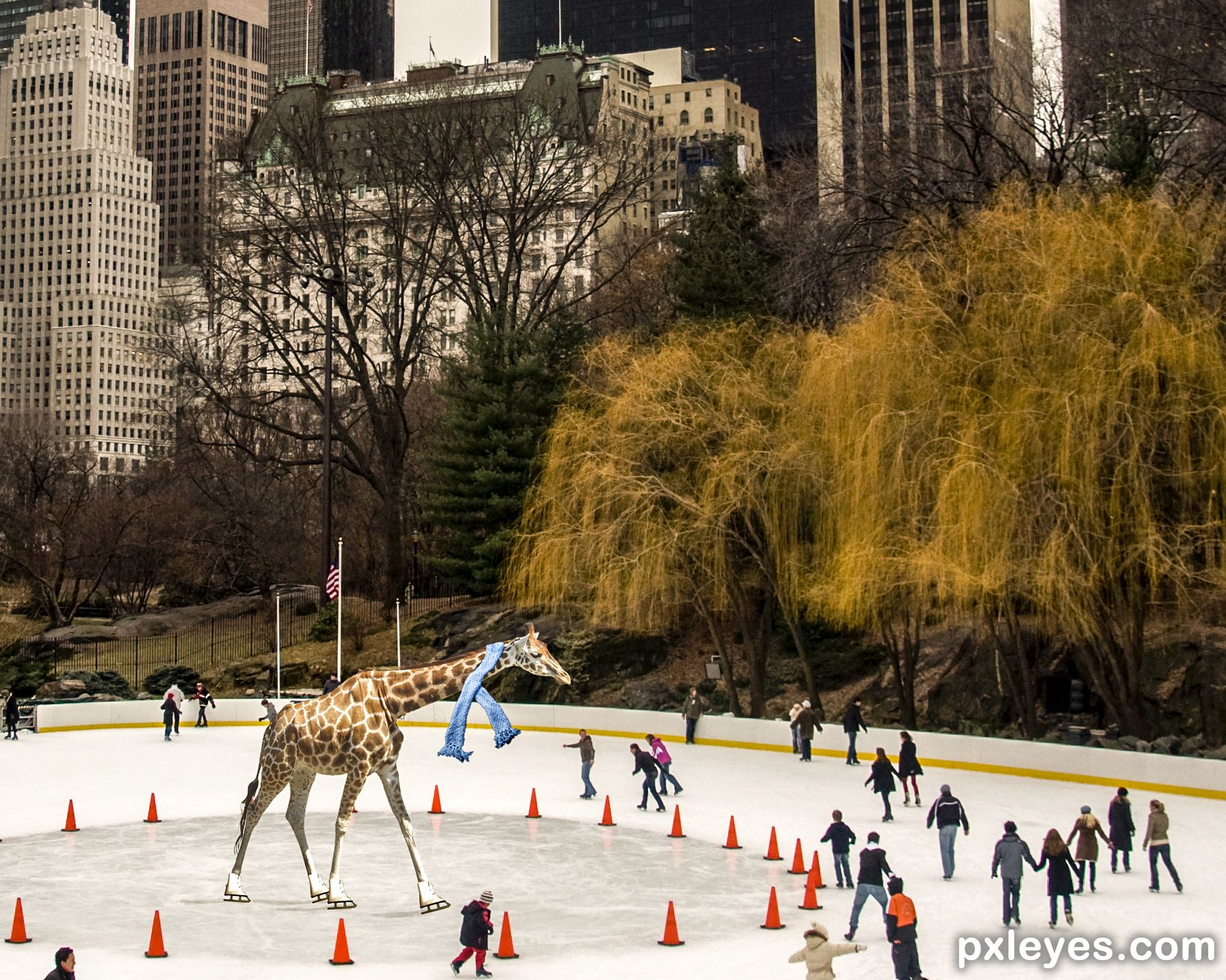 Giraffe skating in Central Park picture, by magicalfruittuts for ...