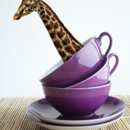 GiraffeTea