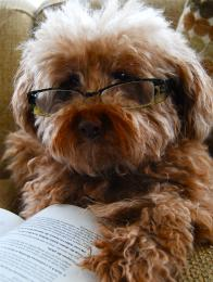 reading glasses Picture