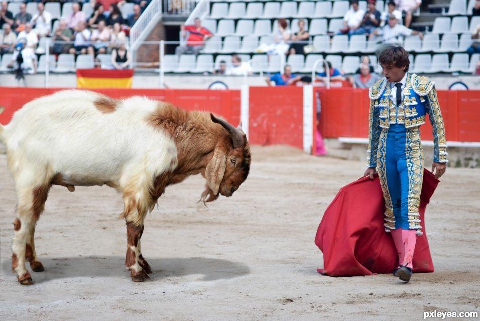 Goat Corrida