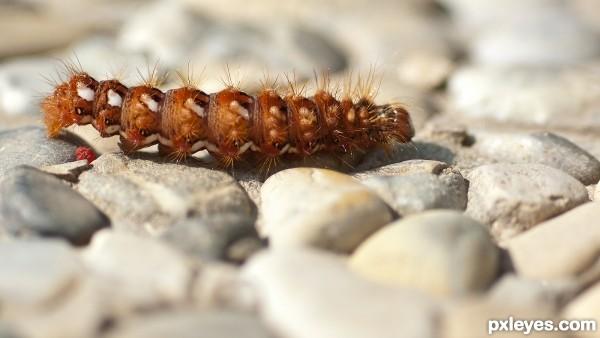 Caterpillar on the go