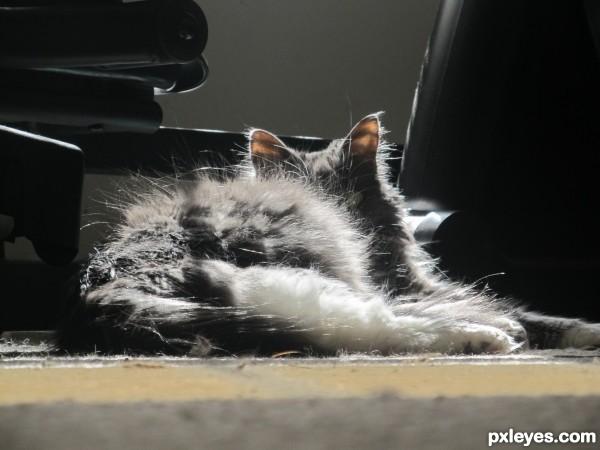 laying[: