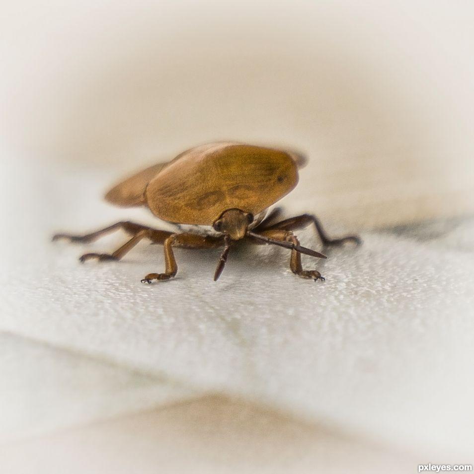 Bugs Eye