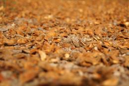 ChestnutShells