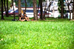Greengrassatthepark