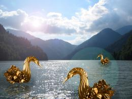goldenswan