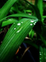wetgrass