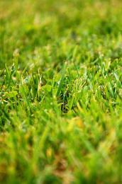 Mownedgrass