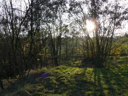Forestgrass