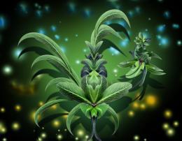 LeafampFlower
